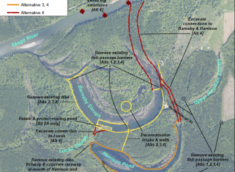 Forget About Channeling the Skagit into the Barnaby Slough